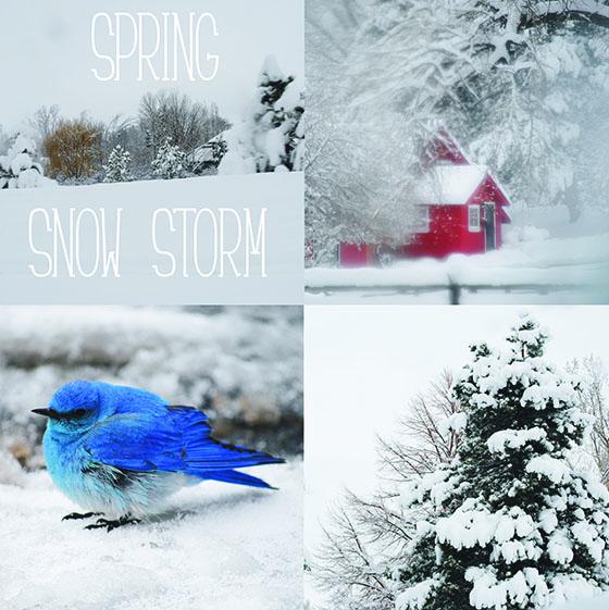 spring.snow.storm
